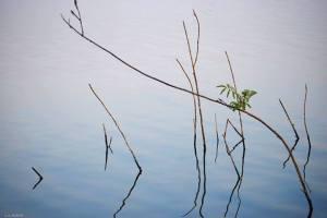 agua y ramas